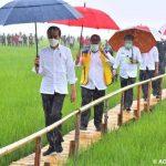 Meskipun Hujan Presiden Tetap Turun Meninjau Langsung Areal Food Estade.